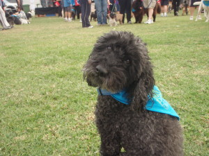 Blackie - blind dog