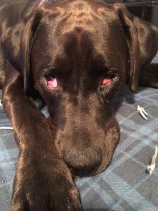 Anita - blind dog