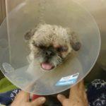 blind dog, dog attack