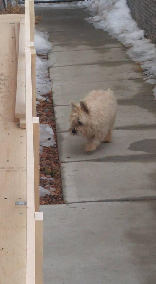Backyard dog ramp – Bruce