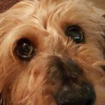 Profile picture of Judy Brodjeski