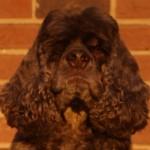 Profile picture of Courtenay