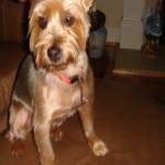 Profile picture of Nancyh